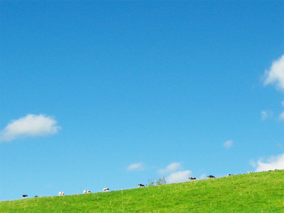 cow001.jpg