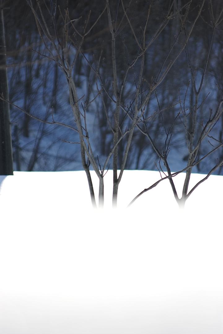 hayashi-snow-s.jpg