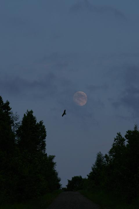 moon-tobi-s.jpg