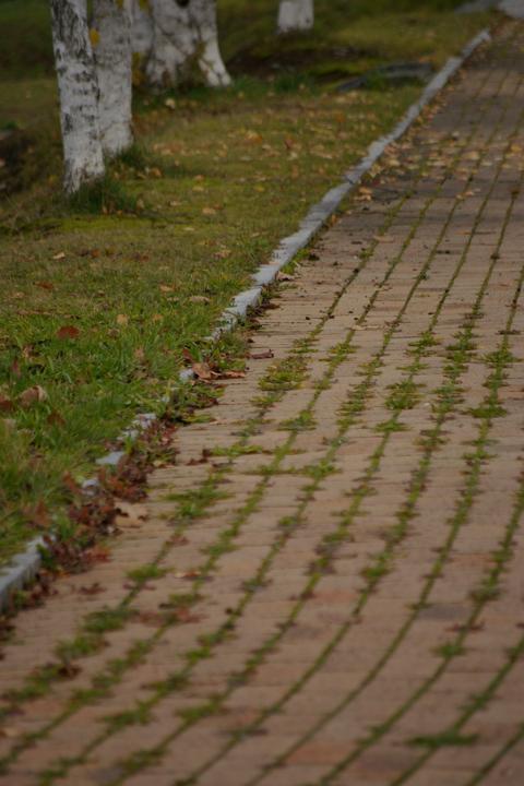 park-road.jpg